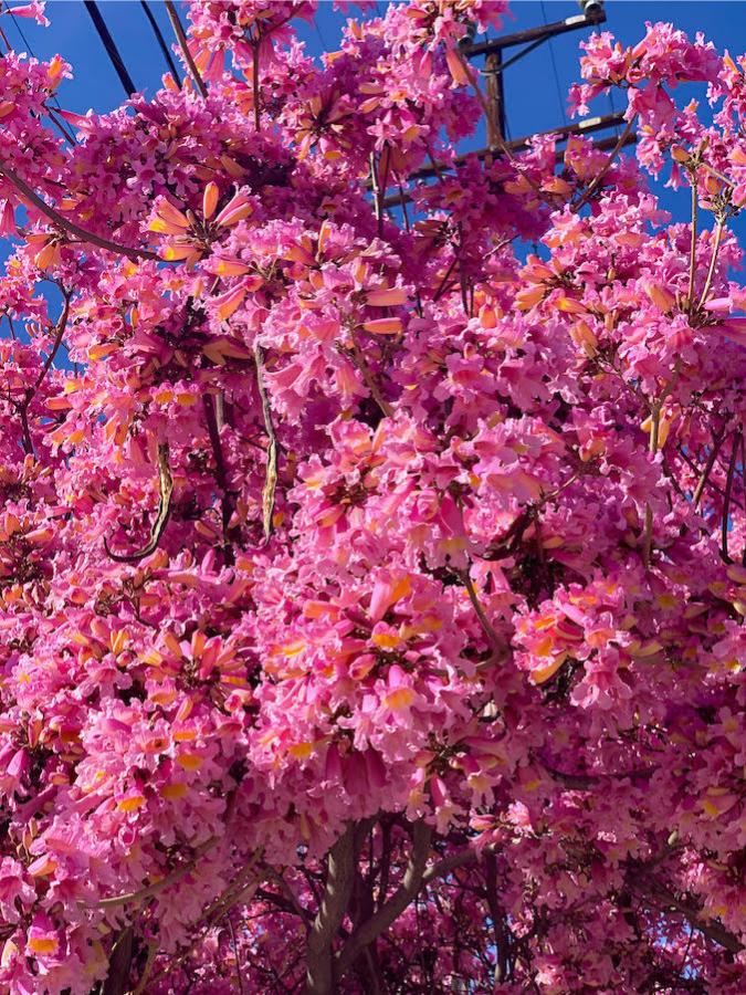 Springtime in LA